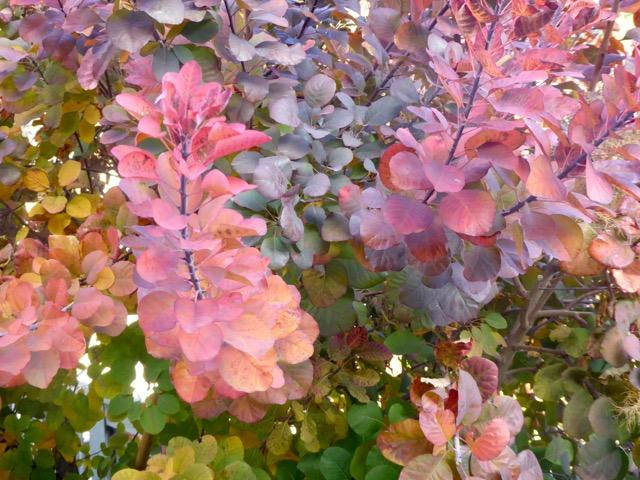 The Miracle of Nature as Fall comes to Marin County