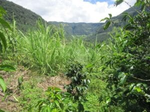 Coffee Tour to Jardin, Colombia